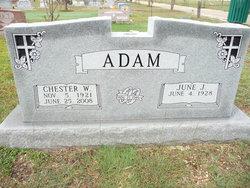 Chester Will Adam