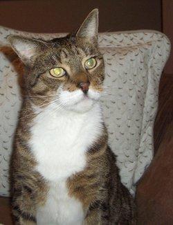 WILEY B. Beloved Cat