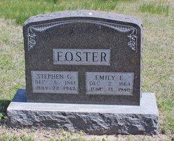 Stephen G Foster
