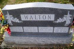 Viola I <I>Mount</I> Walton