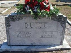 Shirley Cicero Buice