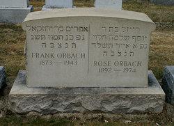 Rose <I>Weichlesbaum</I> Orbach