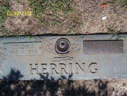 Clara P Herring