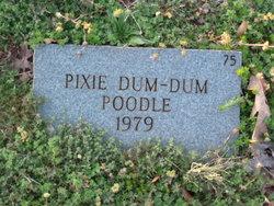 Pixie Dum-Dum Poodle