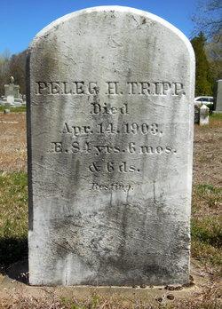 Peleg H Tripp