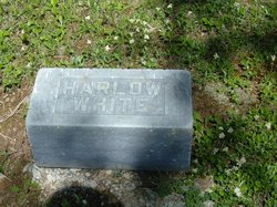 Harlow White