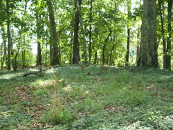 Vineyard Cemetery