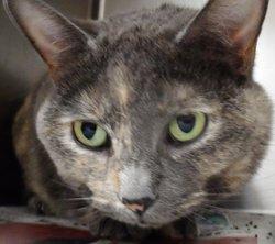 """Polly Polly """"Polly at the Bridge"""" <I>Hecht</I> Cat"""