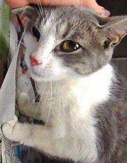 "Jamie Girl ""Beloved"" <I>Hecht</I> Cat"