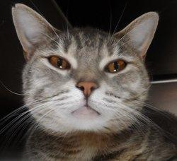 "Thunder ""Beloved"" <I>Hecht</I> Cat"