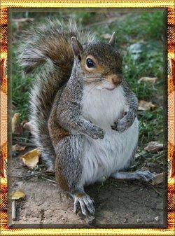 Li'l Craigster The Squirrel