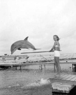 Mitzi the Dolphin