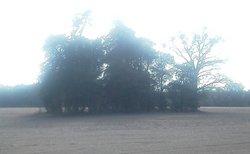 Hinson Cemetery #2