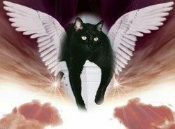 "Romulus Carlos Frank ""Romie"" <I>Hecht</I> Cat"