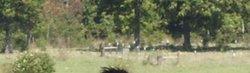 WG Ranch Cemetery
