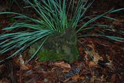 Unknown Grave 4