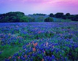Texasnmyheart