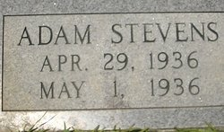 Adam Stevens