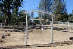 Williams-Duckworth Cemetery
