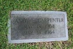 Sandy E Carpenter