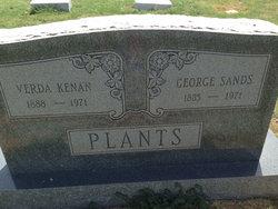 Verda <I>Kenan</I> Plants