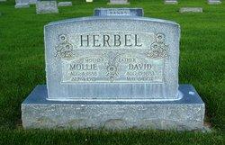 David Herbel
