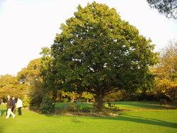 Isle of Wight Crematorium