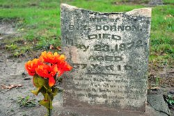 Sophronia <I>Rogers</I> Dornon