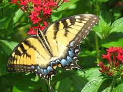 PhotoLepidoptera