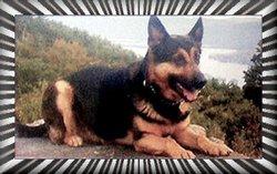 Alex Officer K-9 Dog