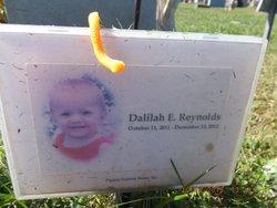 Dalilah E Reynolds