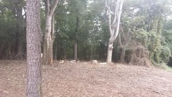 Pippen Cemetery