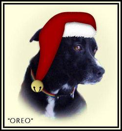 """Oreo """"Oreo my heart"""" Styers"""