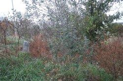 Cushenberry Family Cemetery