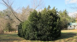 Twyman-Huff Cemetery