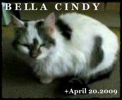 Bella Cindy Cat