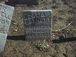 Azalea Garnet Morrison