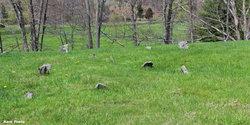 Seybert Gap Cemetery