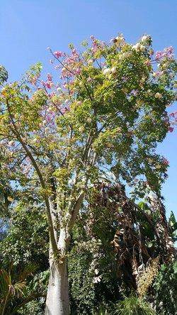 Tree Journey