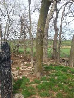 Campbell Graveyard