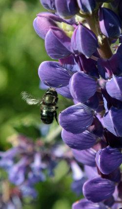 Bee_Charmer