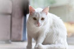 Casper Cat