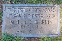 Mollie S Werbin