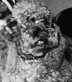 Rufus, II
