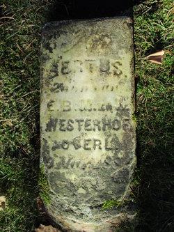 Bertus Westerhof