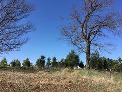 Hunt Ridge Cemetery
