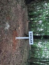 Sholar Cemetery