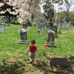 Historic Congressional Cemetery Archivist
