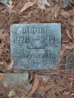 Buddie The Dog
