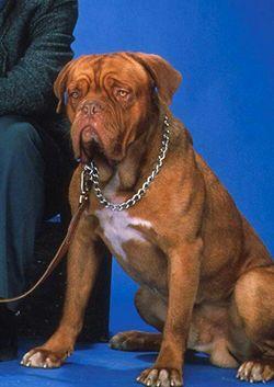Beasley Hooch The Dog 1978 1992